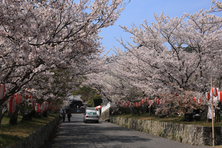 賀集八幡神社・桜