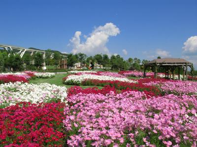 03コスモス:淡路島国営明石海峡公園_1_400×300.jpg